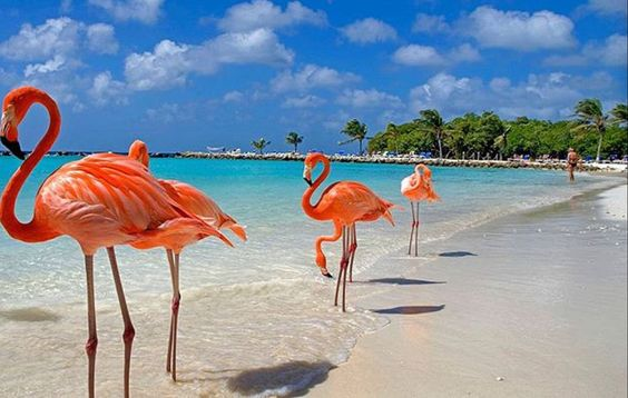 AIR TICKETS PROMOTION! Dominican Republic, Kyiv - La Romana 26.01.2021 12486 ₴